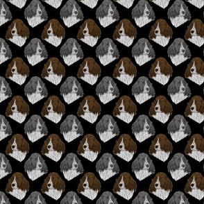 English Springer Spaniel faces - black