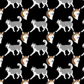 Siberian Huskies - black