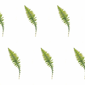 Fern Repeated