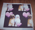 Rrtibetan_terriers_with_hearts_comment_144827_thumb