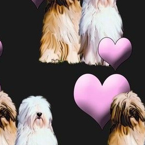 Tibetan Terriers With Hearts