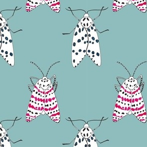 Rattlebox Moths in Blue
