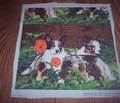 Rrrcardigan_corgi2_comment_144830_thumb