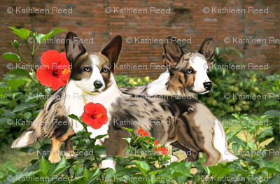 Cardigan Corgis In The Garden