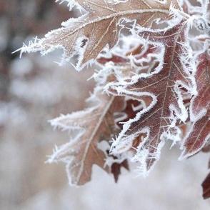 Frosted Oak Leaves