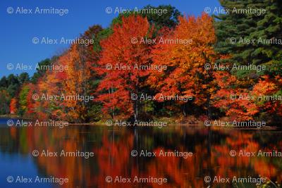 New Hampshire Trees