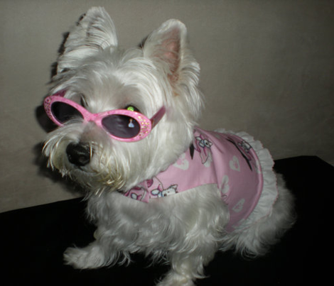 Rrrsundaybest_westie_300_comment_452237_preview
