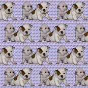 R976553_rrrbulldog_babies2_shop_thumb