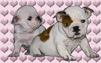Bulldog Babies