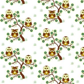 Sleepy brown Owls sitting in a tree