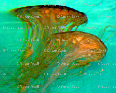 Boston Aquarium Jellyfish