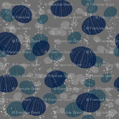 Blue urchin
