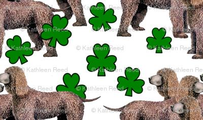 Irish_Water_Spaniels_with_shamrocks