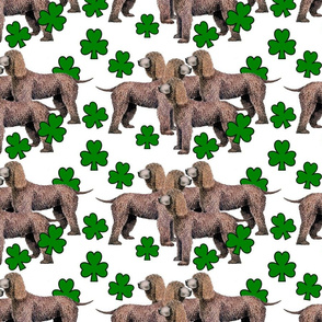 Irish_Water_Spaniels_with_shamrocks