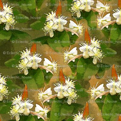 Surinam Cherry Blossom