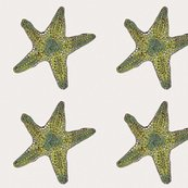 Rrrrrrrrrstar_two1_shop_thumb