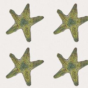 Green Star on cream