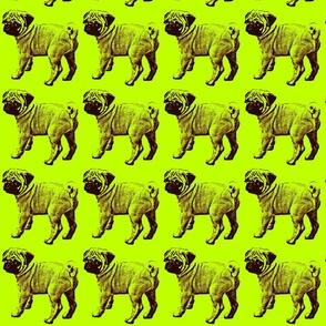 mops Leila_green
