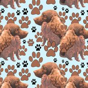 Rramerican_water_spaniel_seamless2_shop_thumb