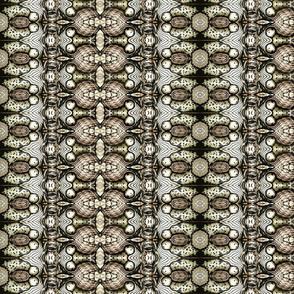 brahmin_moth