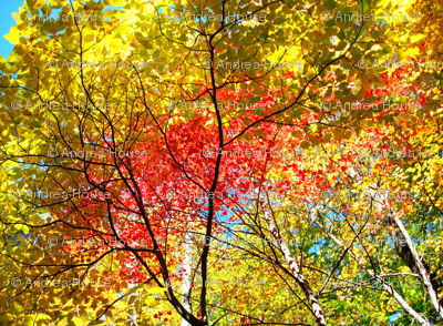 Autumn_Trees_1