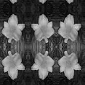 White Lily, Art Nouveau Style, Black, Gray