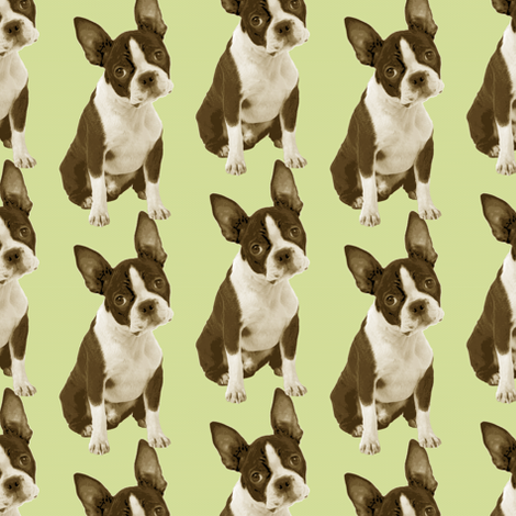 Boston Terrier Half Drop fabric by littlerhodydesign on Spoonflower - custom fabric