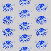 kitty small blue gray