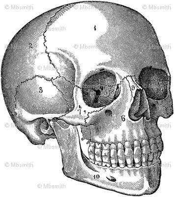 Your Basic Skull
