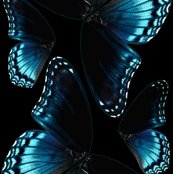 Rrbutterfly_wings_shop_thumb