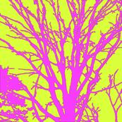 fuschia lime branches