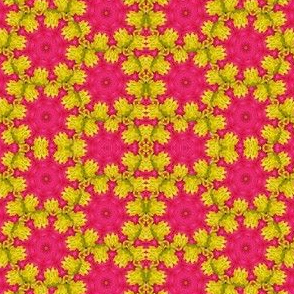 Peter's Painted Petals - Flower Power 17