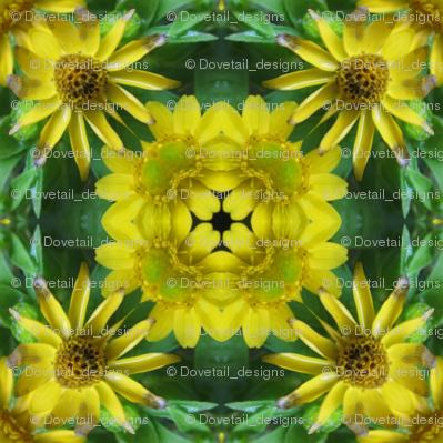 Daisy Dance 18 - Flower Power