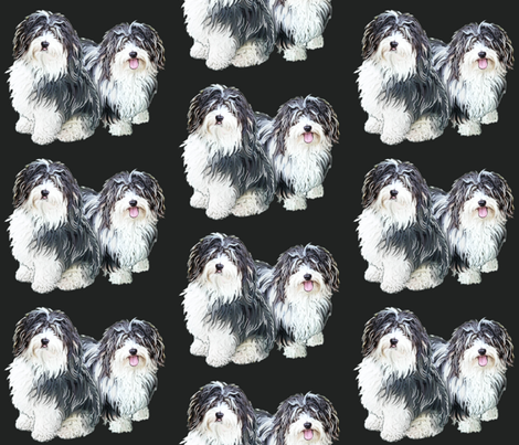 Havanese grouping fabric by dogdaze_ on Spoonflower - custom fabric