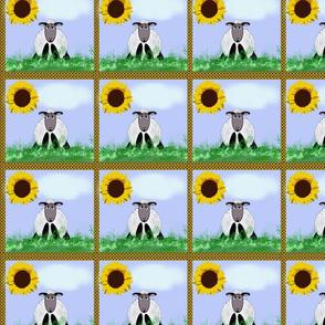Sheepy Sunflower