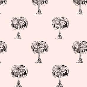 Palms & More Palms