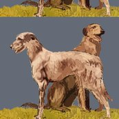 Rrrrrscottish_deerhounds_shop_thumb