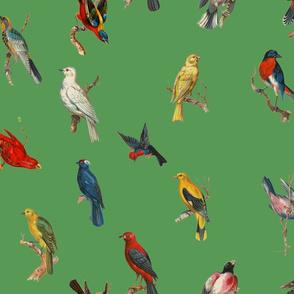 Big Birds Galore - malachite green