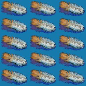 featherb1b