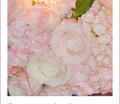 Rrlovely_pink_blossom_tree_comment_150932_thumb