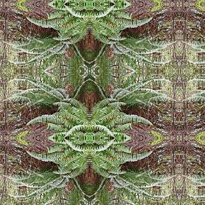 Ferns-please zoom