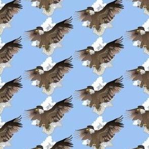 Eagles in Flight-deep