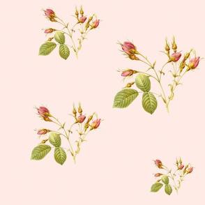 RoseBud in Sorbet pink
