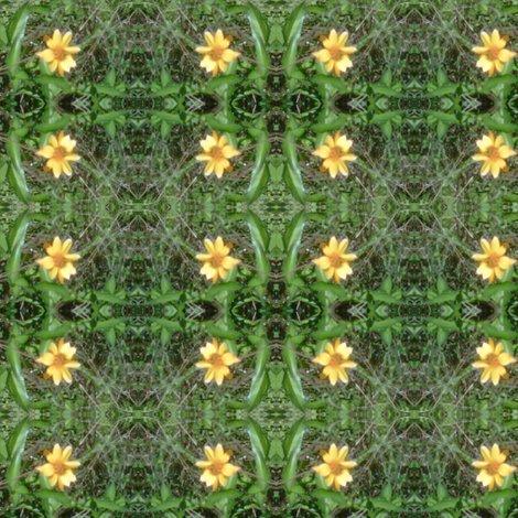 Rrrrrrrimg00610-20120324-1510_ed_ed_shop_preview