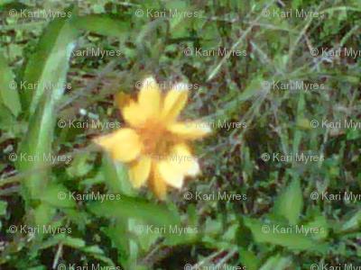 yellow flower big-ed