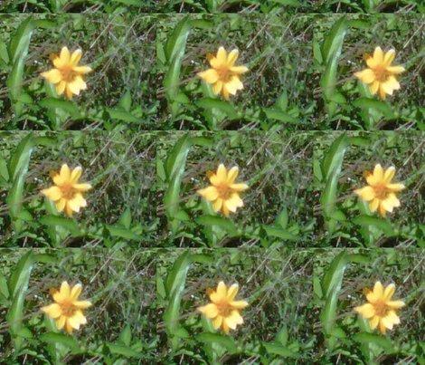Rrrimg00610-20120324-1510_ed_ed_shop_preview
