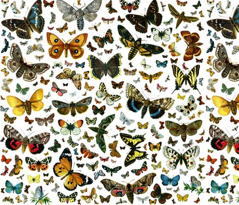 Rrrrrrlarge_square_butterfly_poster_shop_preview