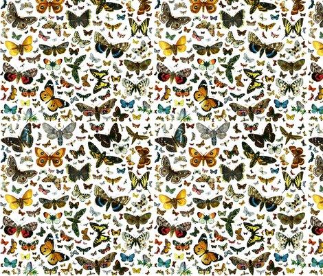 Rrrrrrrrlarge_square_butterfly_poster_shop_preview