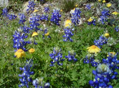 blue bonnets & yellow flowers