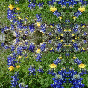 blue bonnets & yellow flowers